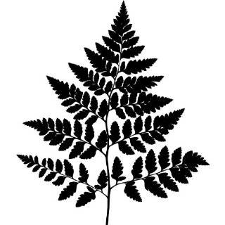 Tree Wall Decals   Fern Leaf Plant life Silhouette   12 inch Removable