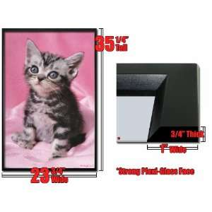 Framed Kitten Poster Pink Furry Cutie Cat Kitty Fr6261