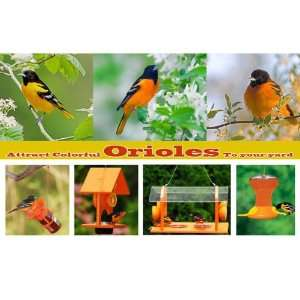 Orioles To Your Yard   Personalized Pre designed Display Post Cards
