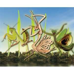 Puzzled Praying Mantis 3D Natural Wood Puzzle: Toys & Games