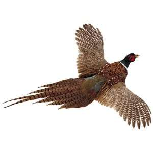 High Flyer Pheasant
