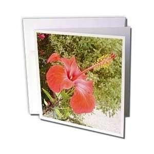 Hibiscus   Hibiscus Welcome   bunga raya, flower, flowers, hibiscus